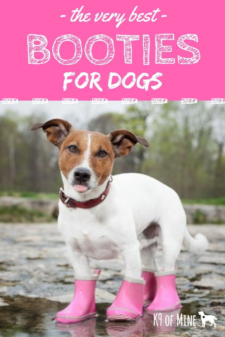 Pin On Dog Clothes Apparel Diy Patterns Designer Picks