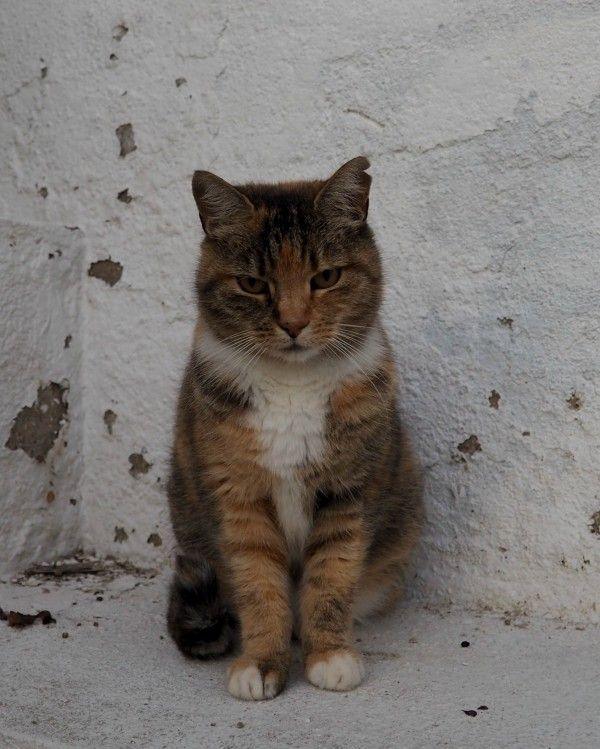 You will find this adorable kitty if you walk along the alleys near the port of Sitges in Spain. She's very timid, but once you'll gain her trust, she'll reward you with lots of headbutts and leg brushes. Story and 15 photos: http://www.traveling-cats.com/2017/11/cats-from-sitges-spain.html