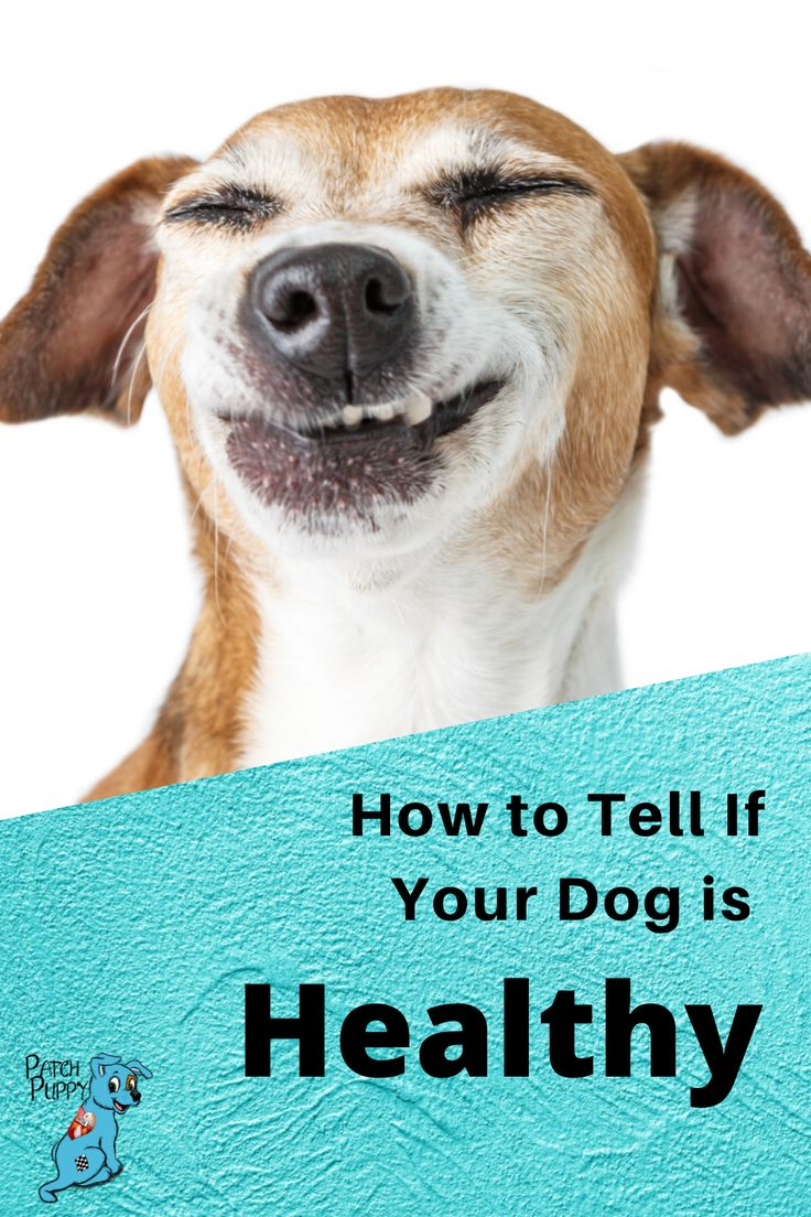 How to tell if your dog is healthy