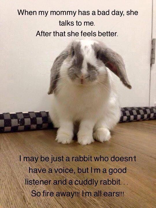 Ikbhal Cute Babies: 310 Best Funny Rabbits