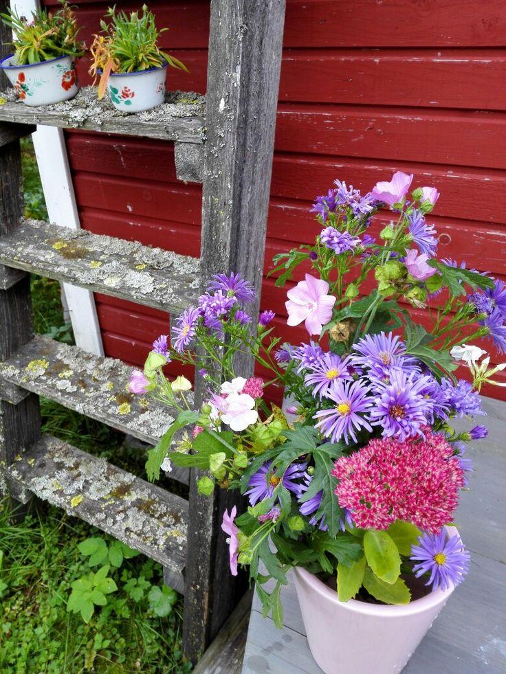 Syyskuun kukkaset