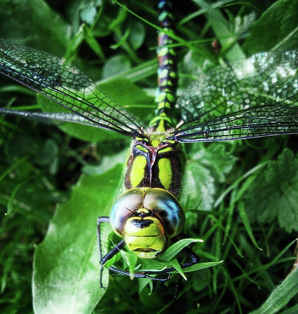 Beautiful Dragonfly. Saw it, had to take a photo of it.