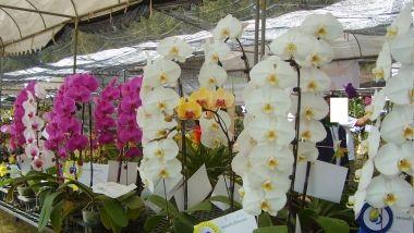 Cum poți grăbi înflorirea orhideei? De ce e bine să pui cubulețe de gheață în ghiveci | AM Press