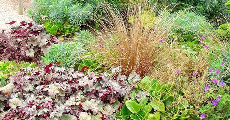 Auch außerhalb der Blütensaison lassen sich wintergrüne Stauden und Gräser zu attraktiven Stimmungsbildern im Garten arrangieren. Wir erklären, welche Pflanzen Sie dafür benötigen.