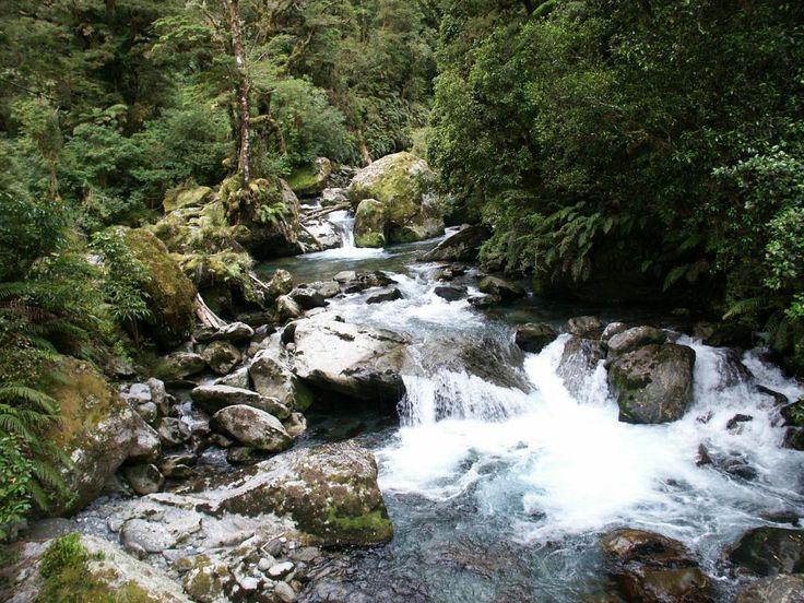 Fiordland National Park (Te Wahipounamu) Reviews - Te Anau, Fiordland National Park Attractions - TripAdvisor