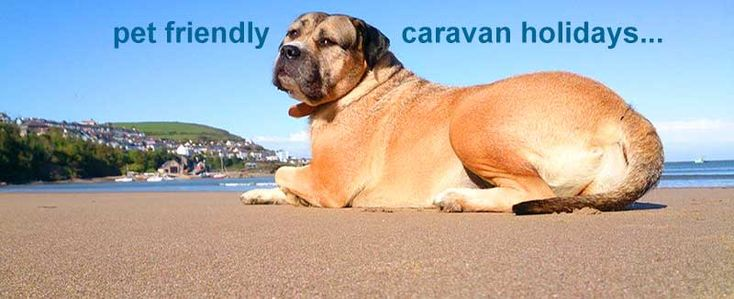 Excellent Dog Friendly Caravan Parks  Caravan Sitefinder