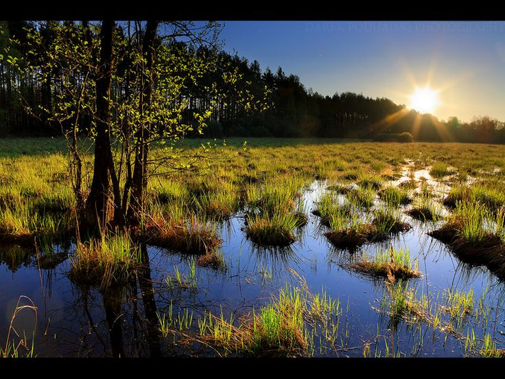 Kampinos National Park, Poland | Sunny Morning 2 by MindShelves.deviantart.com on @deviantART