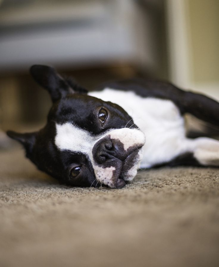 Hyperactive Puppy: Got A Hyper Or Anxious Dog? Homeopathic Calming Remedies