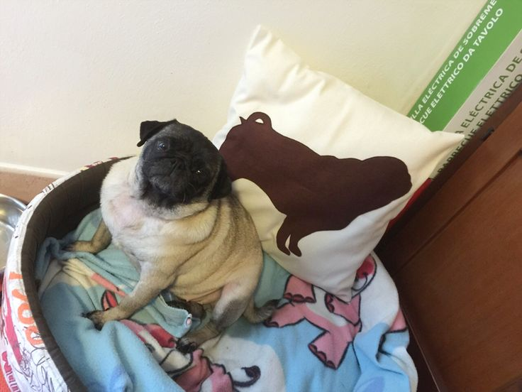 Pug pillow cover by #ItsTimeToDream