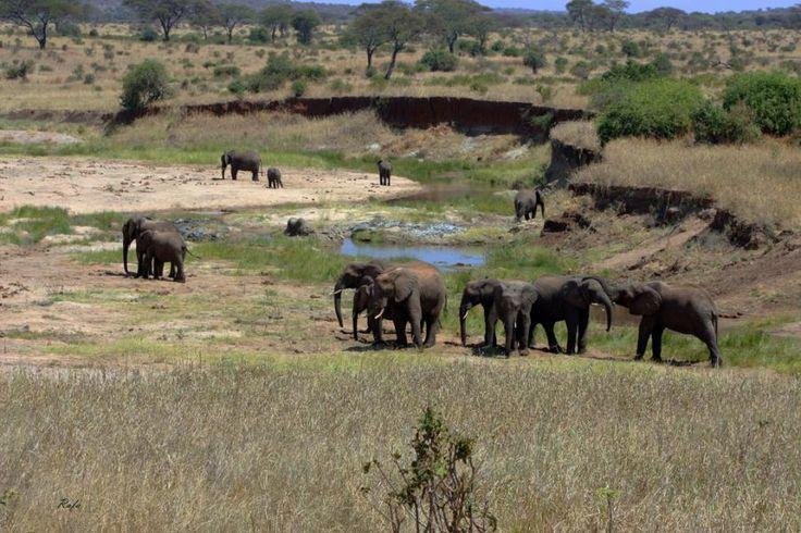 serengeti africa