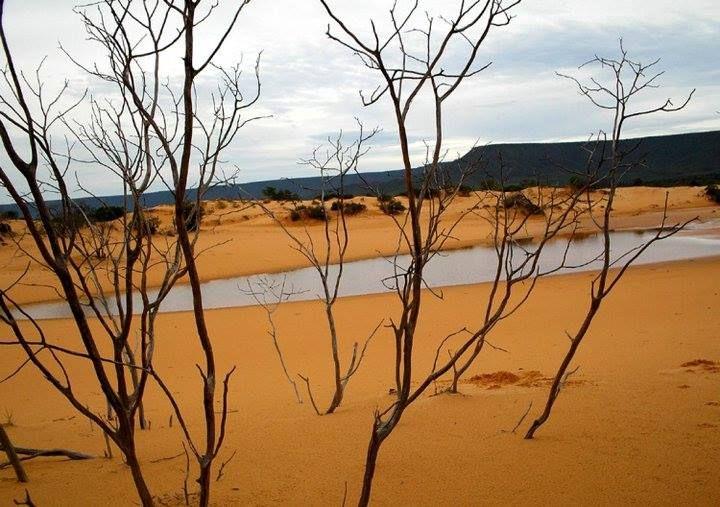 Copa de árvore recoberta pelas areias vindas das serras ao redor. Veja a Serra…