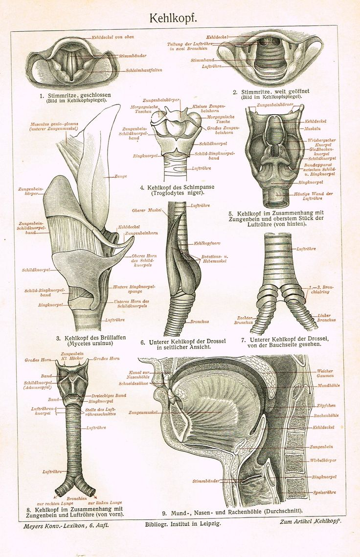 The 450 best ENT, ORL & Audiology Oldies images on Pinterest ...