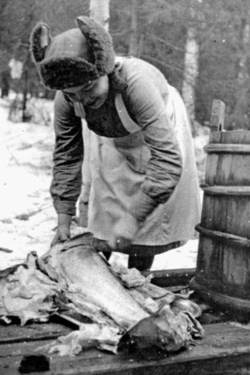 A Lotta gutting a salmon at the front during the Finnish reconquest of East Karelia.