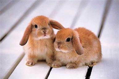 twee lieve konijntjes op de bank!