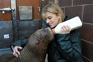Baby Walrus Adapts to Life in Brooklyn - NYTimes.com