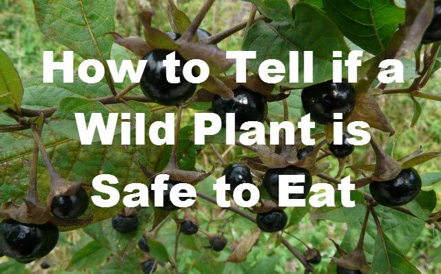 Wild Plants: How to Tell Which Plants Are Edible and Safe to EatNone