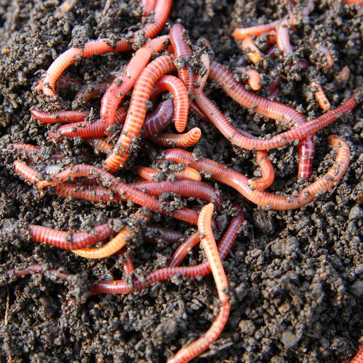Learn About The Benefits Of Worm Composting As Well How To House Feed