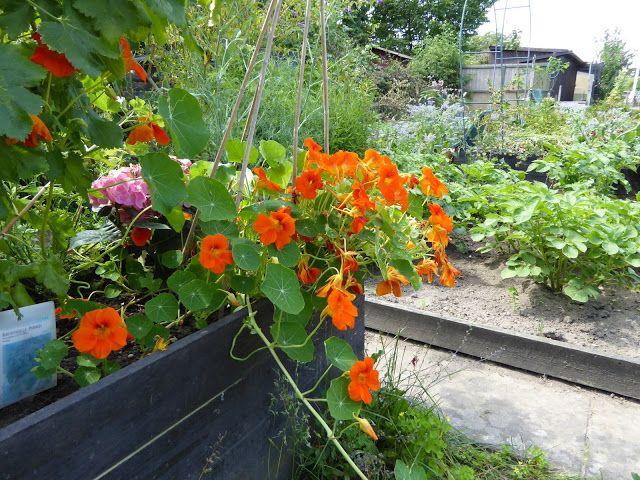 Fasters korthus: Garden look