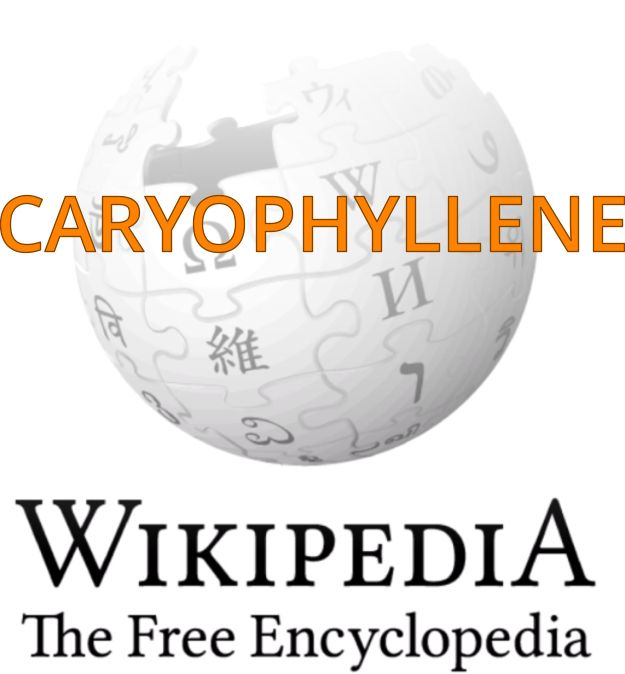 """CARYOPHYLLENE: """"Caryophyllene is one of the chemical compounds that contributes to the spiciness of black pepper.""""--wiki."""