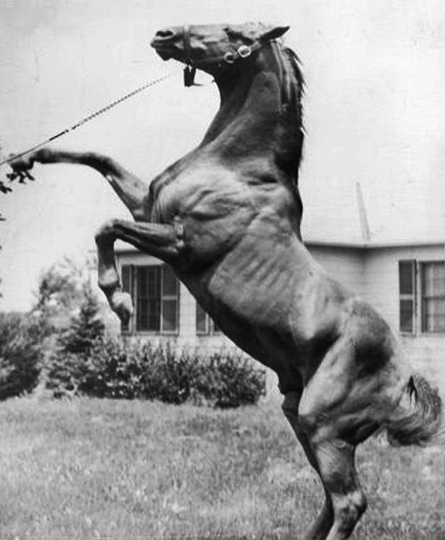 A rare photo of the legend Man o'War
