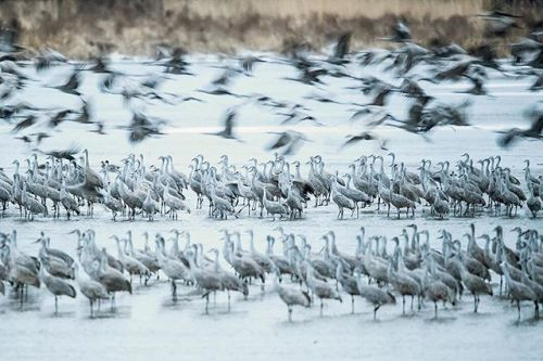 @chema_outside offers tips for photographing the rhythms of the last great American wildlife migration in the January/February issue article Sandhill Crane Migration.    #OPJanFeb #landscape_lovers #sky_captures #landscapephotography #fantastic_earth #landscape_captures #ic_landscapes #ig_exquisite #ourplanetdaily #landscapelovers #instanaturelover #welivetoexplore #allnatureshots #specialshots #landscapestyles #sandhillcranes #migration #birdphotography #wildlifephotography via Outdoor…