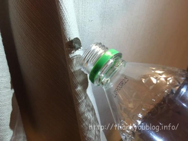 カメムシ 駆除 ペットボトル作戦 カメムシ 駆除 カメムシ 殺虫剤