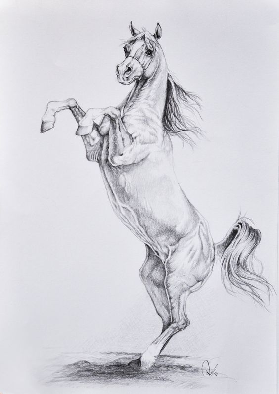 Великой пятницей, крутые картинки лошадей для срисовки