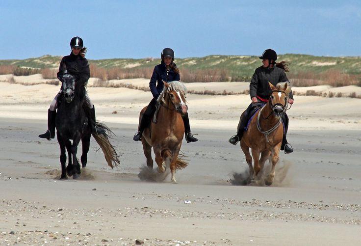 Dit is een top strandrit met leuke paarden en op een heerlijk rustig stuk strand in Noord Holland. Het hele jaar door mag je overdag over het strand!