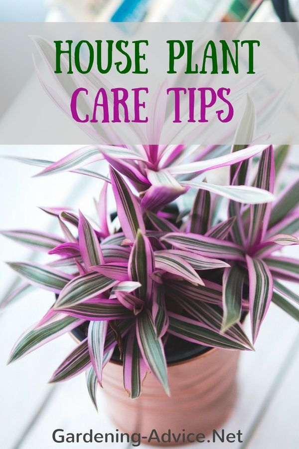 Indoor House Plant Care made easy! Learn about the care of flowering and foliage…