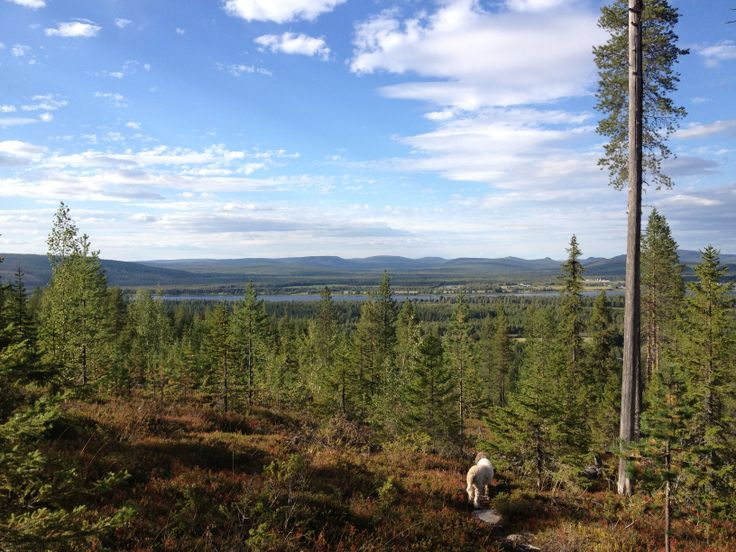 On the way to Everstin piilo, Pello, Lapland