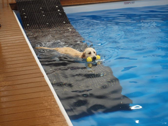 37 Awesome dog pool ramps images                                                                                                                                                                                 More