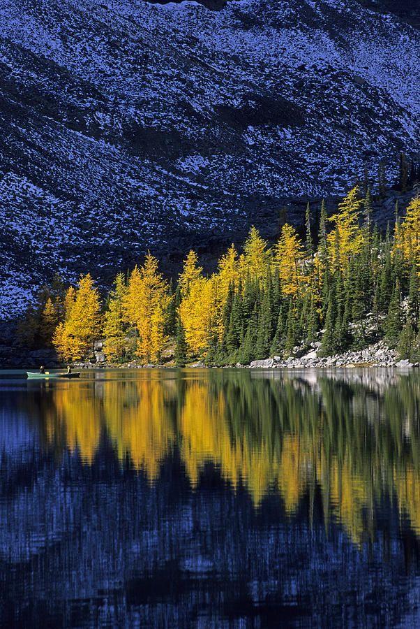 ✮ Autumn - Alpine Larch Trees, Lake Agnes, Banff National Park, Canada