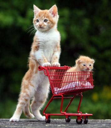 "Chesney, an 8-week-old kitten, pushes ""step-brother"" Joey, a 2-week-old kitten, around in a mini shopping cart in, Devon, England. Joey was ..."