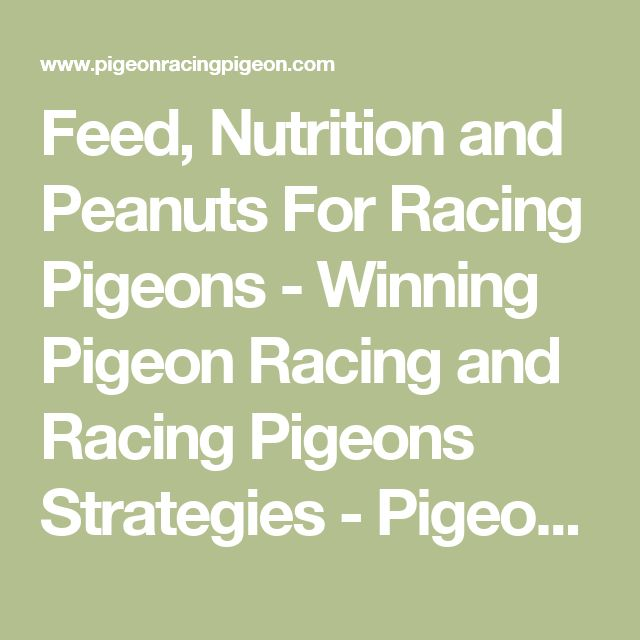 Feed, Nutrition and Peanuts For Racing Pigeons - Winning Pigeon Racing and Racing Pigeons Strategies - Pigeon Insider