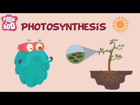 Learn about Photosynthesis with Dr. Binocs. Hey kids, do you know how plants and trees make food for themselves? Have you ever heard the word 'photosynthesis...