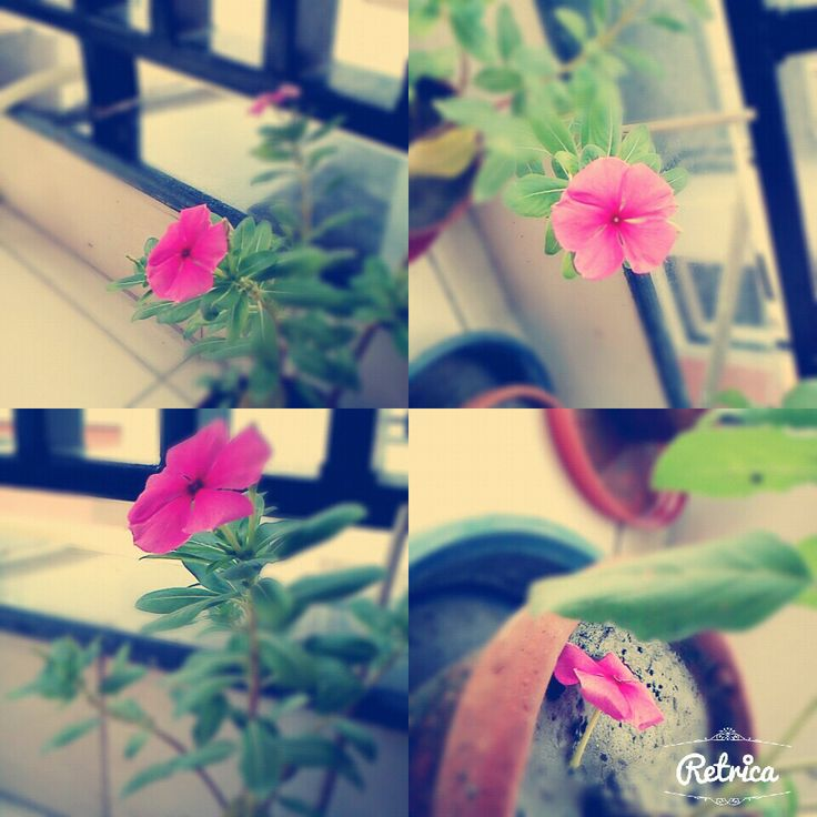 A pink flower from different angles :)