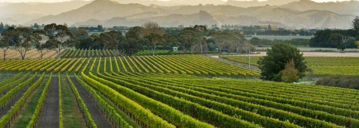 Winery Tours Gisborne New Zealand  www.gisbornewine.co.nz