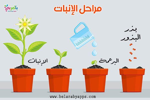 رسم دورة حياة النبات مراحل نمو النباتات بالصور انفوجرافيك بالعربي نتعلم Planter Pots Plants Herbs