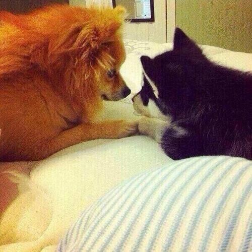 Hatchi and Loki are so adorable aw (zayn and Liams dogs)