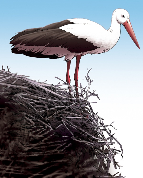 Fairy Oak-Antenna: the crane