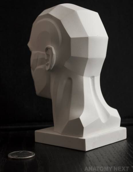 https://www.facebook.com/Anatomy4Sculptors/photos/pcb.954025404696609/954024941363322/?type=3