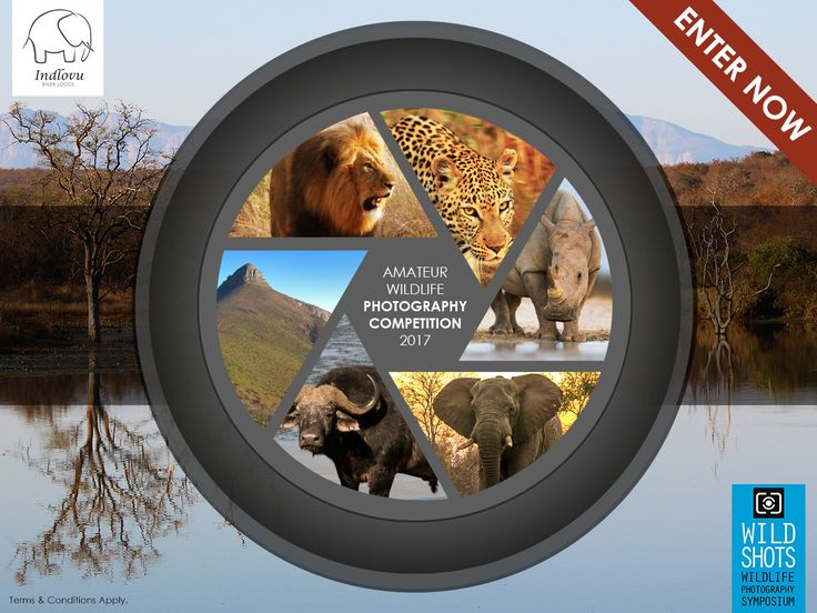 Take part in our new amateur wildlife photography competition! Anyone can enter! More info: http://ow.ly/fg8530aN4dt The overall winner will receive an 7 night Bush and Beach Safari, worth R 31 000-00, from Indlovu River Lodge - Big 5 Photographic Game Reserve in the Greater Kruger Park and Strand Beach Lodge - Luxury Beach Front Accommodation in Strand in the Cape Winelands. The winner in each category will receive a VIP entry to the Wild Shots Educational Outreach Photography Symposium in…