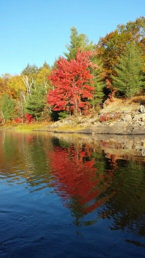 It's fall again in Parry Sound! Come and see the beauty that Georgian Bay offers from above this amazing time of year!