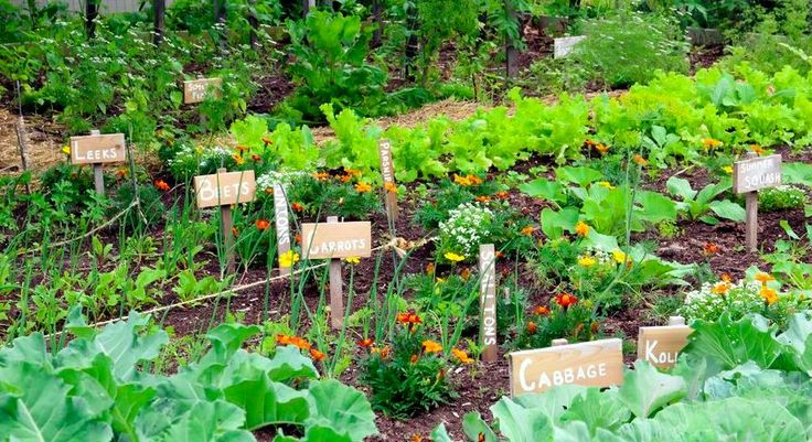 Love growing your own vegetables? These 5 high yield gardening tips will help you to increase the productivity of your garden.