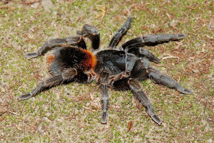 Tarantulas &Roaches for Sale