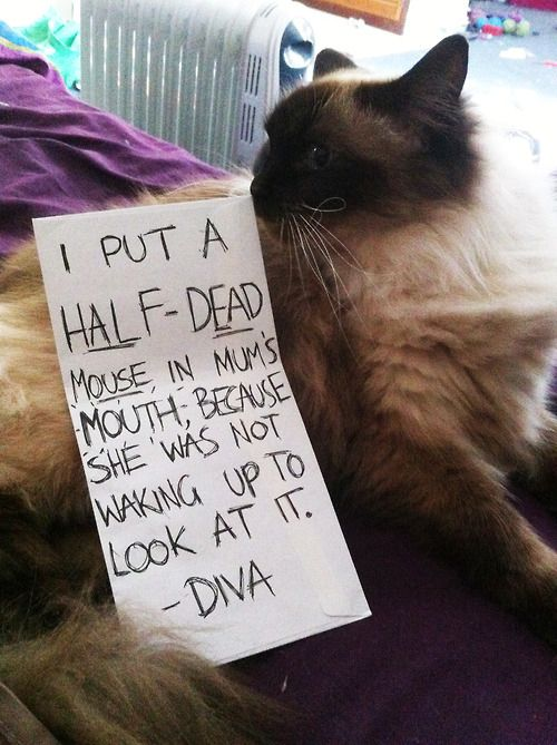 Cat-Shaming At Its Best Except that cats can never feel remorse. Heartless beasts.