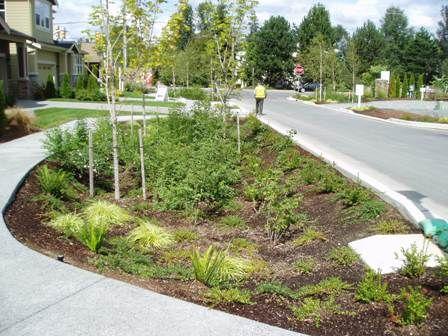 Rain garden design reducing runoff through rain for Landscape drainage design