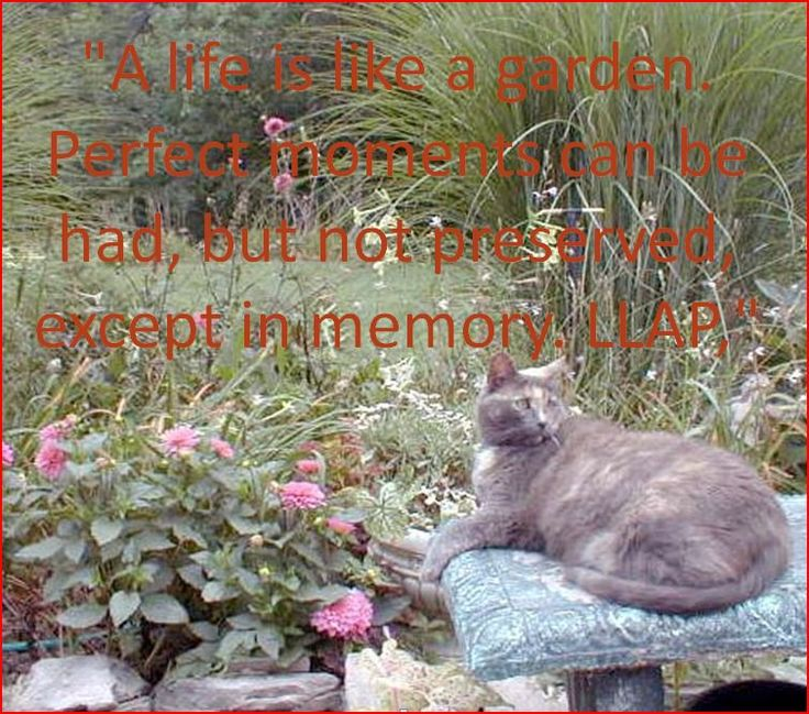 A life is like a garden. Perfect moments can be had, but not preserved, except in memory. LLAP, Leonard Limoy