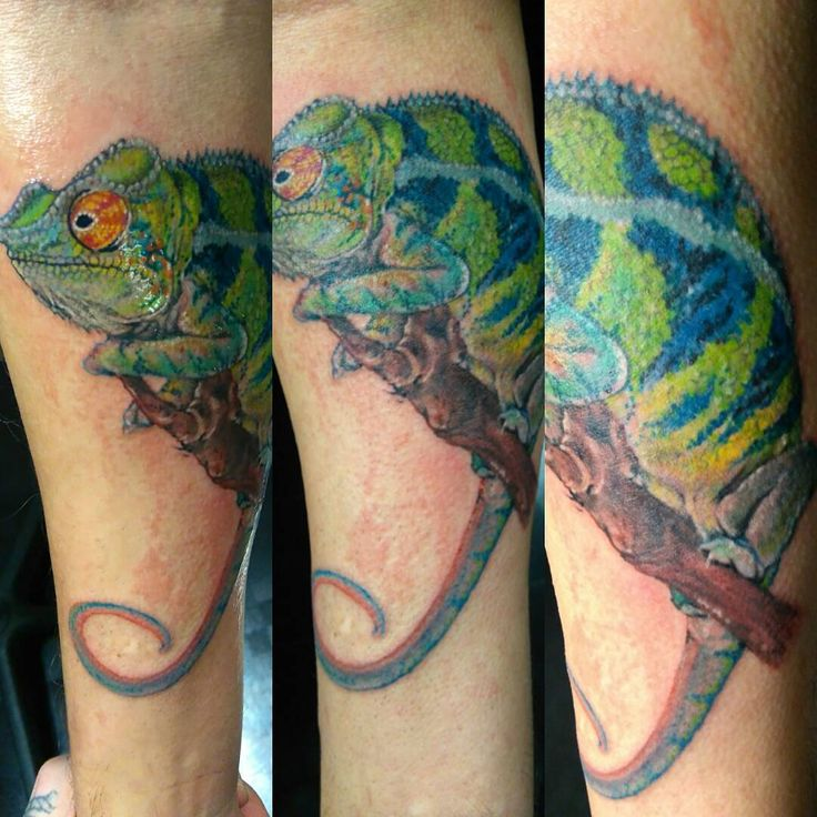 Chameleon Tattoo Designs Drawings: 39 Best Chameleon Tattoo Drawings Images On Pinterest