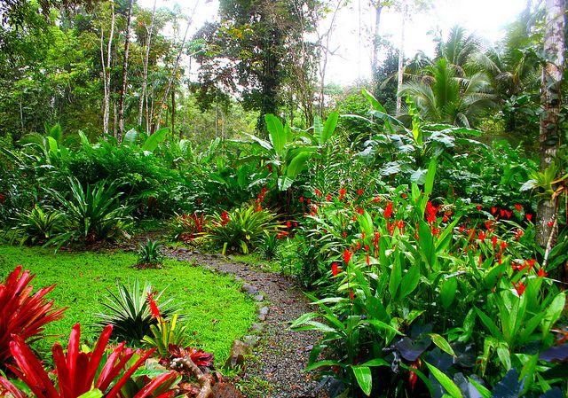 Jardim da selva em Casa Tres Monos   – Paisagismo tropical
